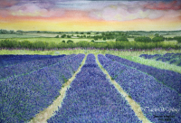 Watercolour/gouache painting of Lavender Fields by London artist, Tracie Wayling
