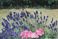 Watercolour/gouache painting of Lavender garden by London artist, Tracie Wayling