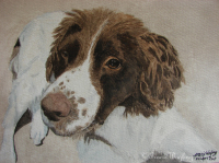 Pet portrait, English Retriever, gouache/watercolour painting by London artist, Tracie Wayling